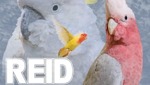 """NP Premiere: Reid Stefan – """"For the Birds"""""""