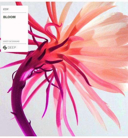 edx-bloom