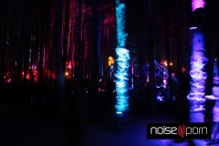 Forest-Night-EF