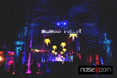 Sherwood-Forest-EF