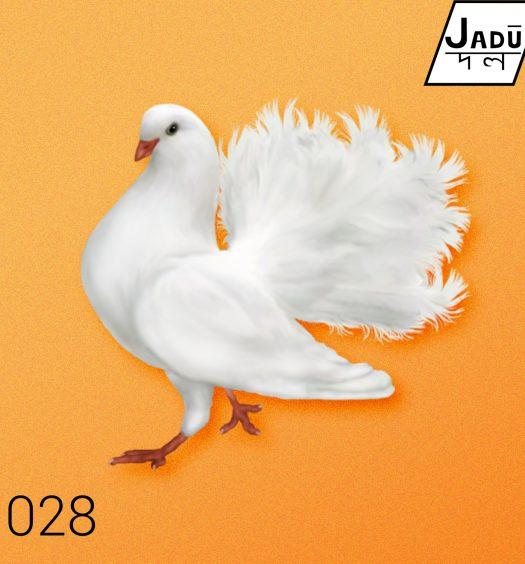 dove_cover