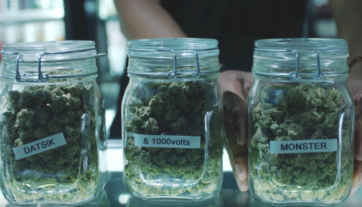 "Datsik and 1000volts Hold Up Weed Dispensary in ""Monster"" Music Video"